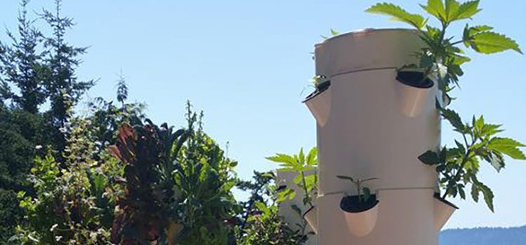 Aeroponics And Cannabis Cultivation With Tower Garden Ganjapreneur