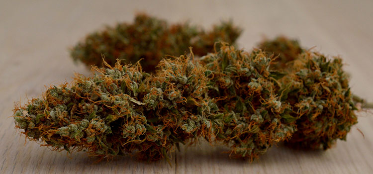 Large, cured cannabis nug lying on its side.