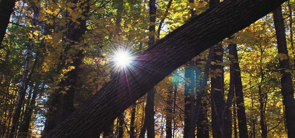 The sun shines through a New England forest, pictured here piercing the foliage just above the trunk of a fallen tree.
