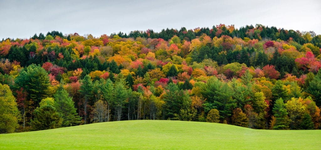 Autumn-colored leaves in a Vermont forest.