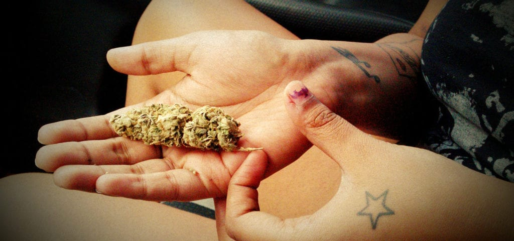 A woman holds a large, cured cannabis nug in her palm.
