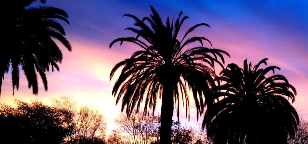 Palm trees silhouetted before a California sunset.