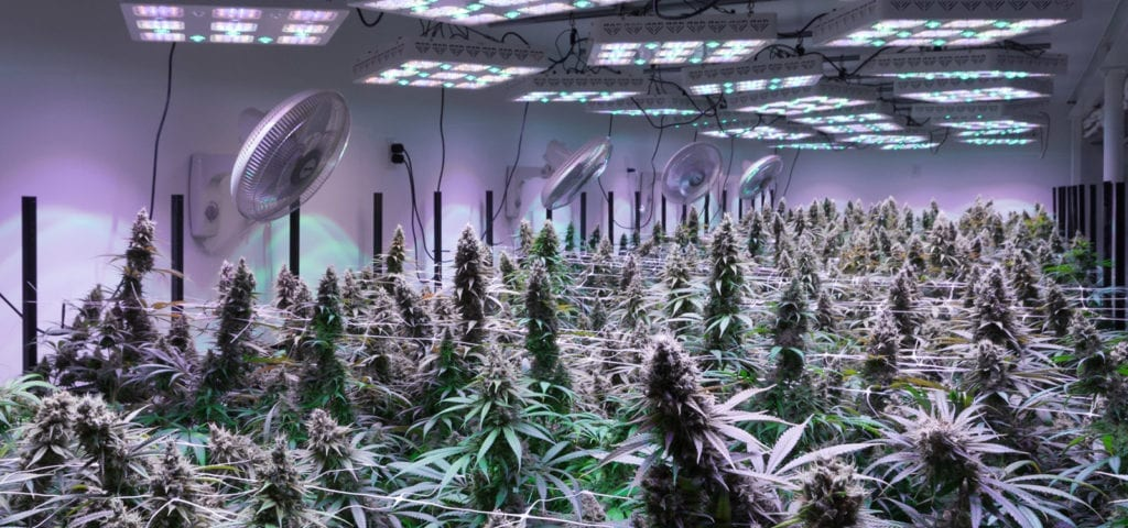 Inside of a commercial grow room in Bellingham, Washington.