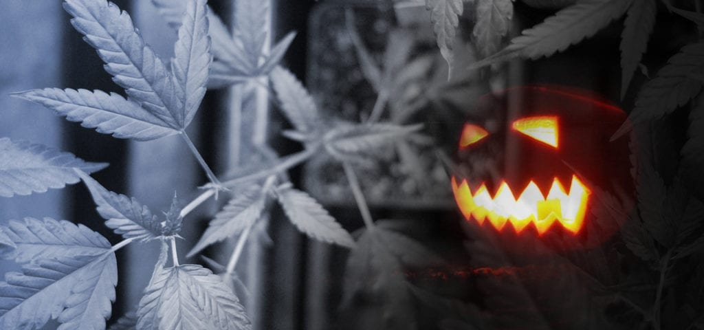 A spooky jack-o-lantern haunts this digital collage of a commercially grown cannabis plant.