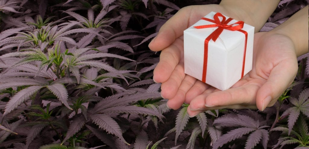 Digital collage combining a cannabis grow room with the giving of a gift-wrapped and holiday-themed present.