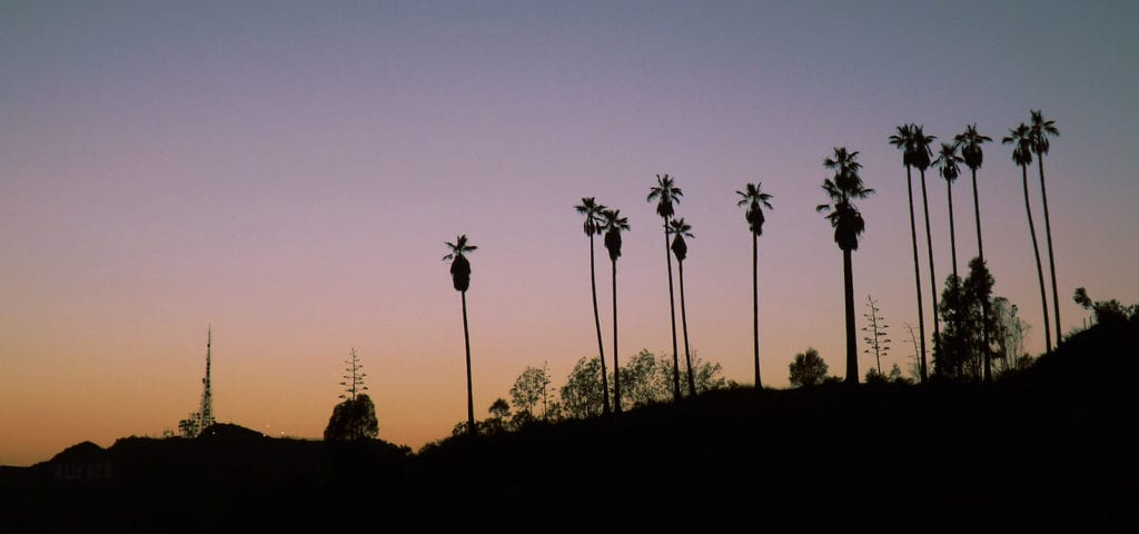 The silhouette shapes of palm trees against a sunset background.