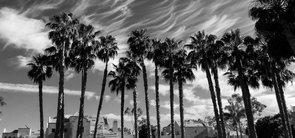 Palm trees swaying in the wind beneath a lightly cloudy, California sky.