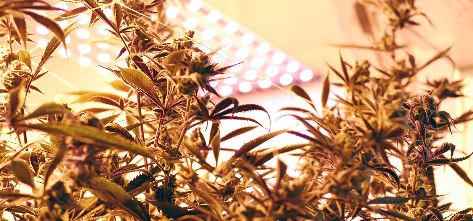 Study: 96% of Cancer Patients Find Relief with MMJ thumbnail