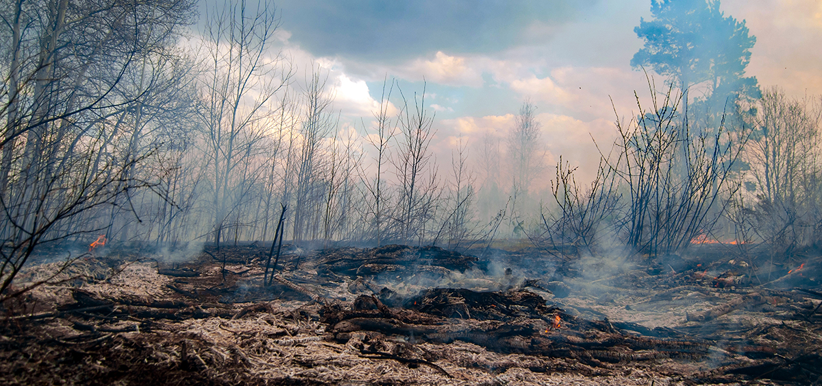 Congress Proposes Giving Cannabis Industry Wildfire Aid
