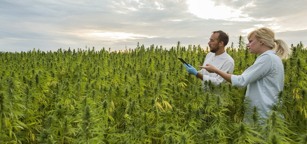 post-image-College of Central Florida Approved for Hemp Cultivation