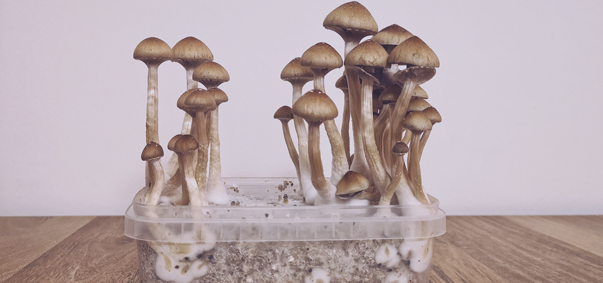 photo of Minnesota Medical Cannabis Firm to Study Psychedelic Medicine image